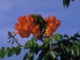 Blumen und Landschaften